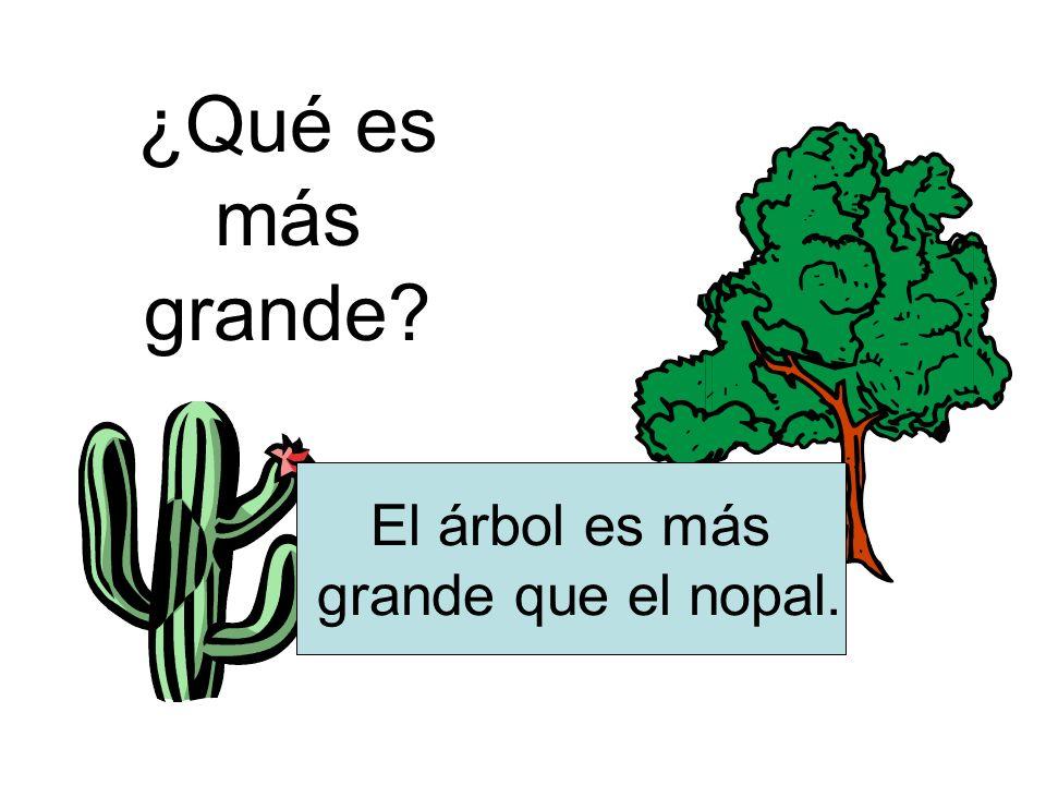 ¿Qué es más grande El árbol es más grande que el nopal.