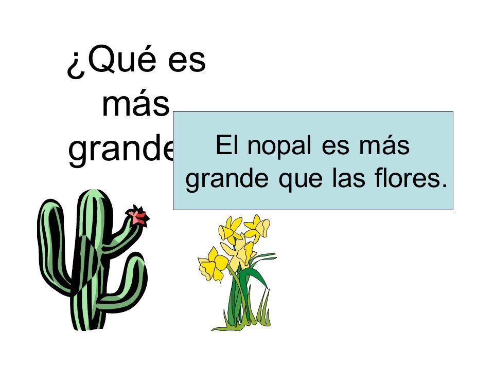 ¿Qué es más grande El nopal es más grande que las flores.