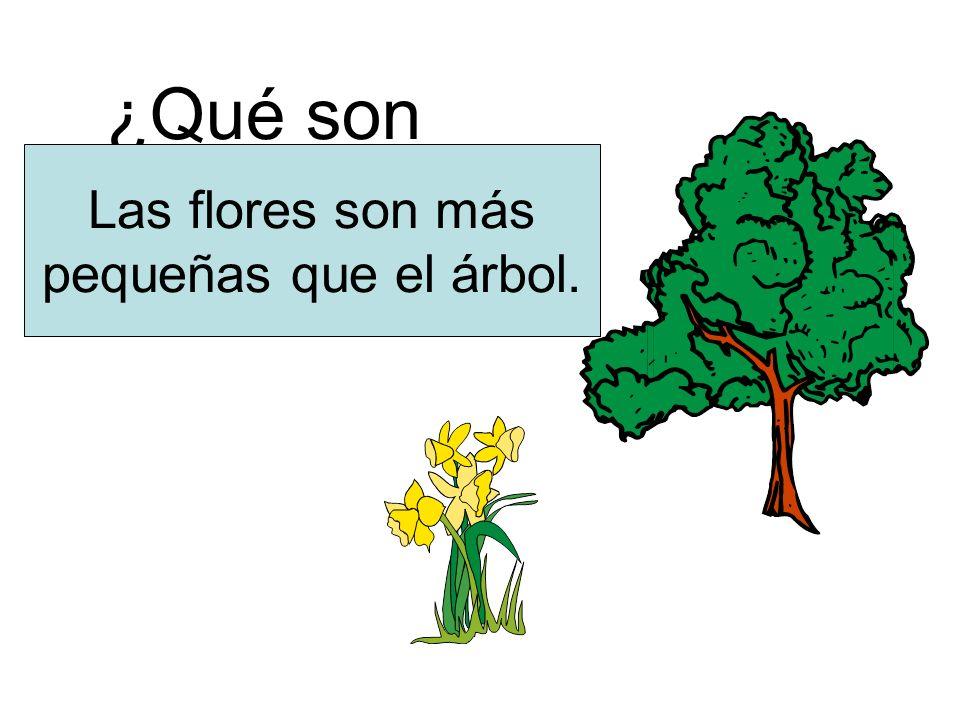¿Qué son más pequeñas Las flores son más pequeñas que el árbol.