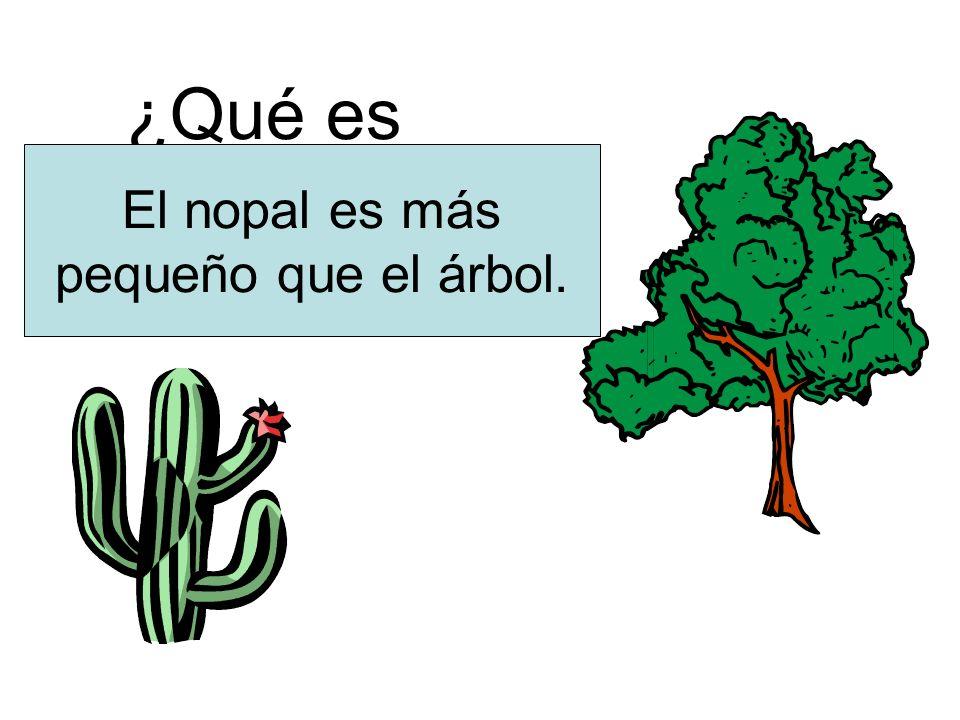 ¿Qué es más pequeño El nopal es más pequeño que el árbol.