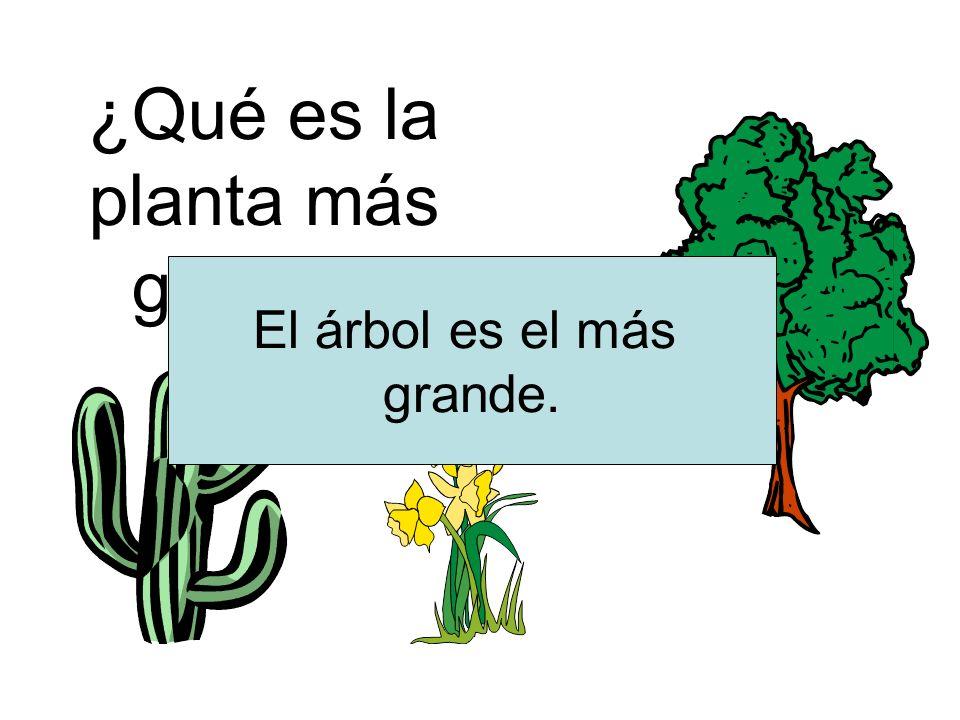 ¿Qué es la planta más grande