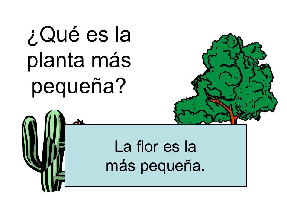 ¿Qué es la planta más pequeña