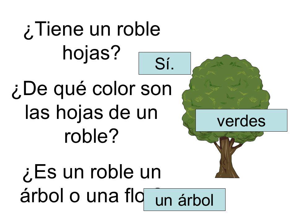 ¿De qué color son las hojas de un roble