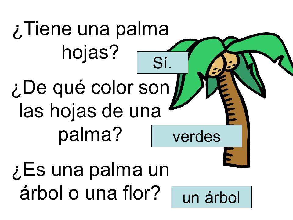 ¿De qué color son las hojas de una palma