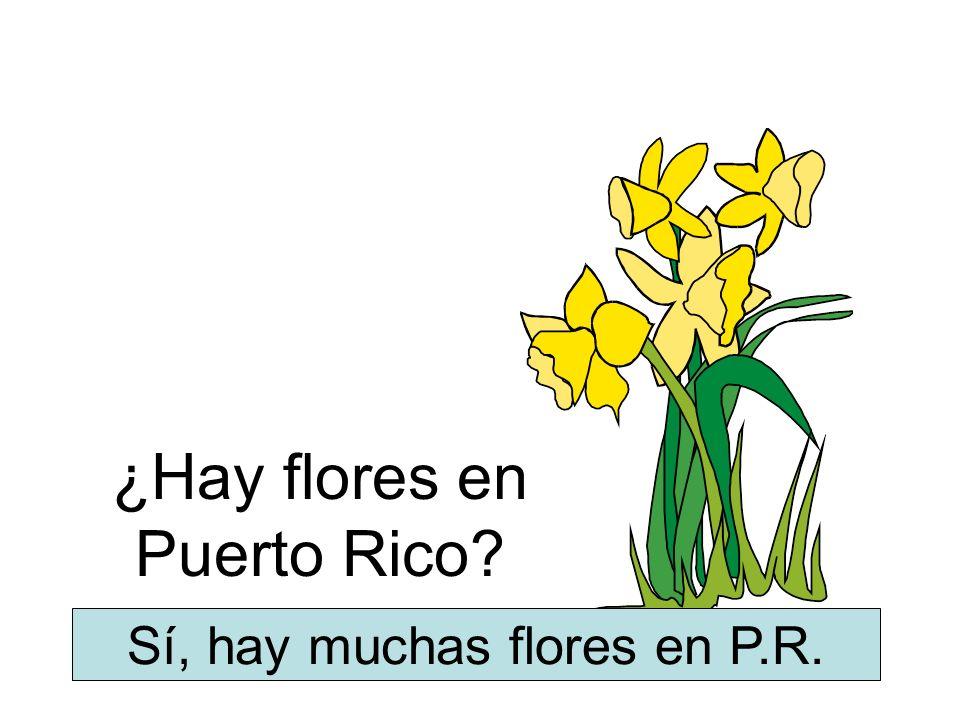 ¿Hay flores en Puerto Rico