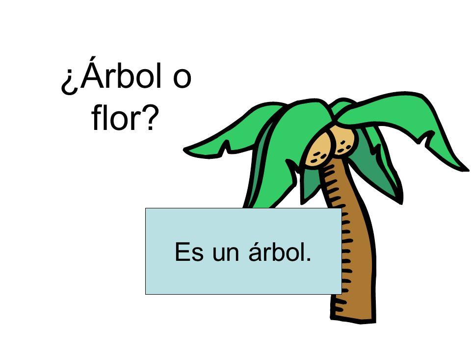 ¿Árbol o flor Es un árbol.