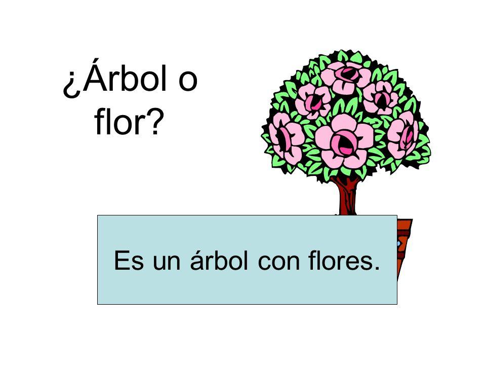 ¿Árbol o flor Es un árbol con flores.