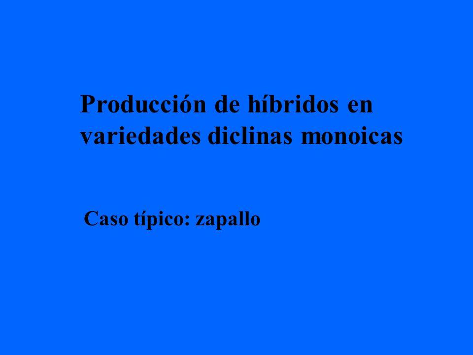 Producción de híbridos en variedades diclinas monoicas