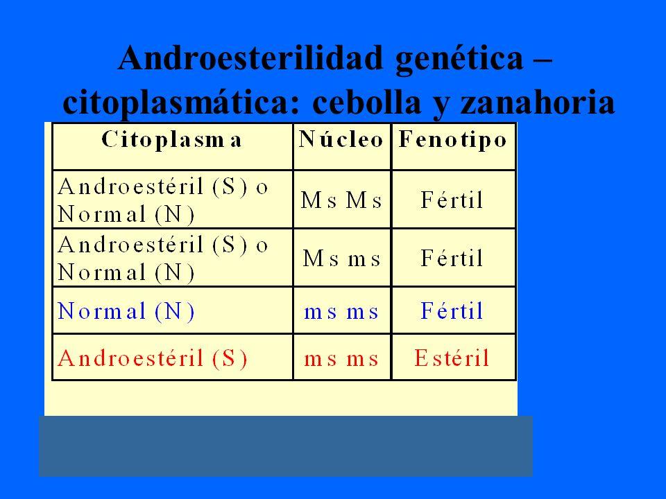 Androesterilidad genética – citoplasmática: cebolla y zanahoria