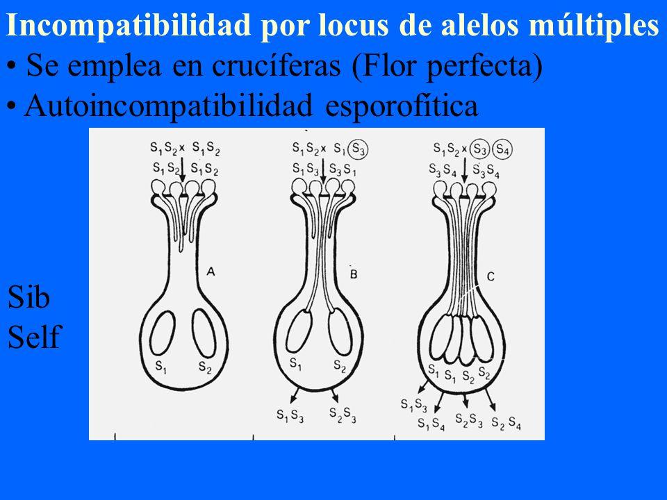 Incompatibilidad por locus de alelos múltiples