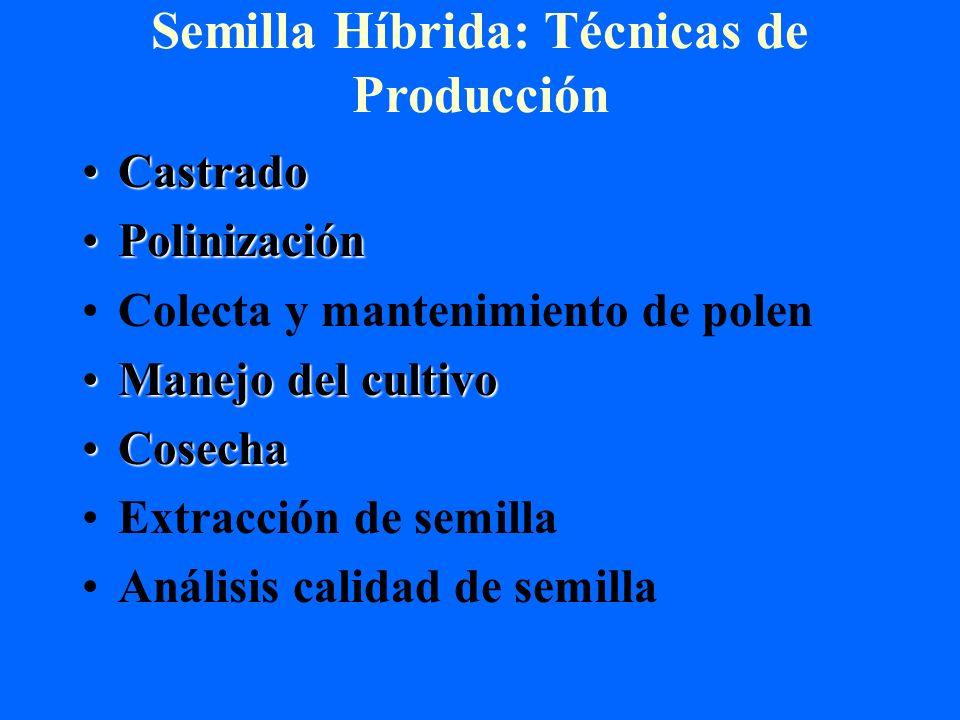 Semilla Híbrida: Técnicas de Producción