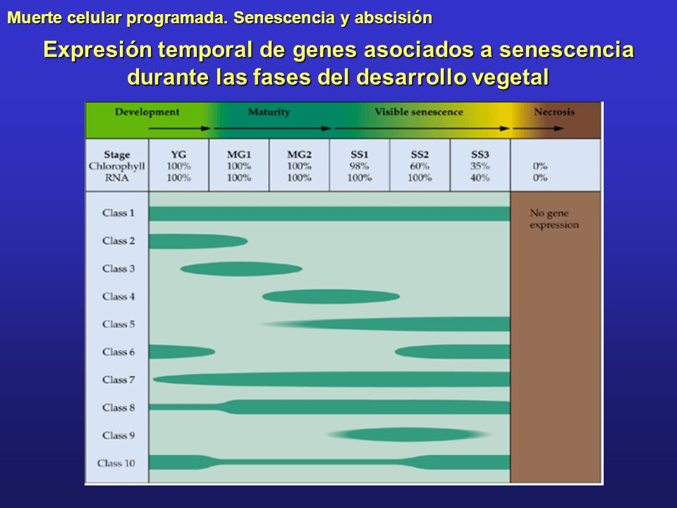 Expresión temporal de genes asociados a senescencia durante las fases del desarrollo vegetal