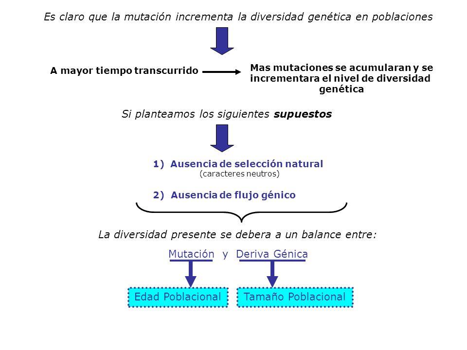 Mas mutaciones se acumularan y se incrementara el nivel de diversidad
