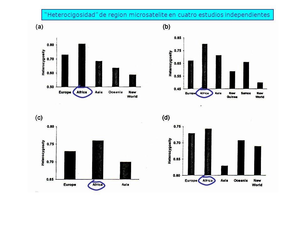 Heterocigosidad de region microsatelite en cuatro estudios independientes