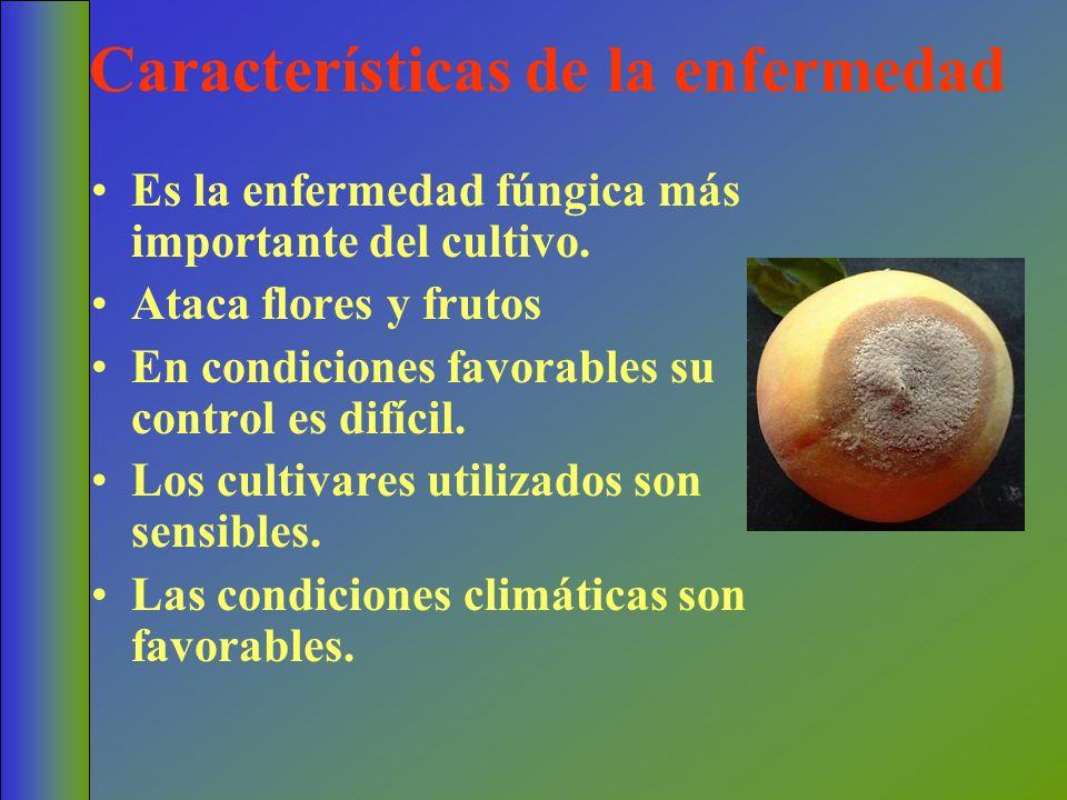 Características de la enfermedad