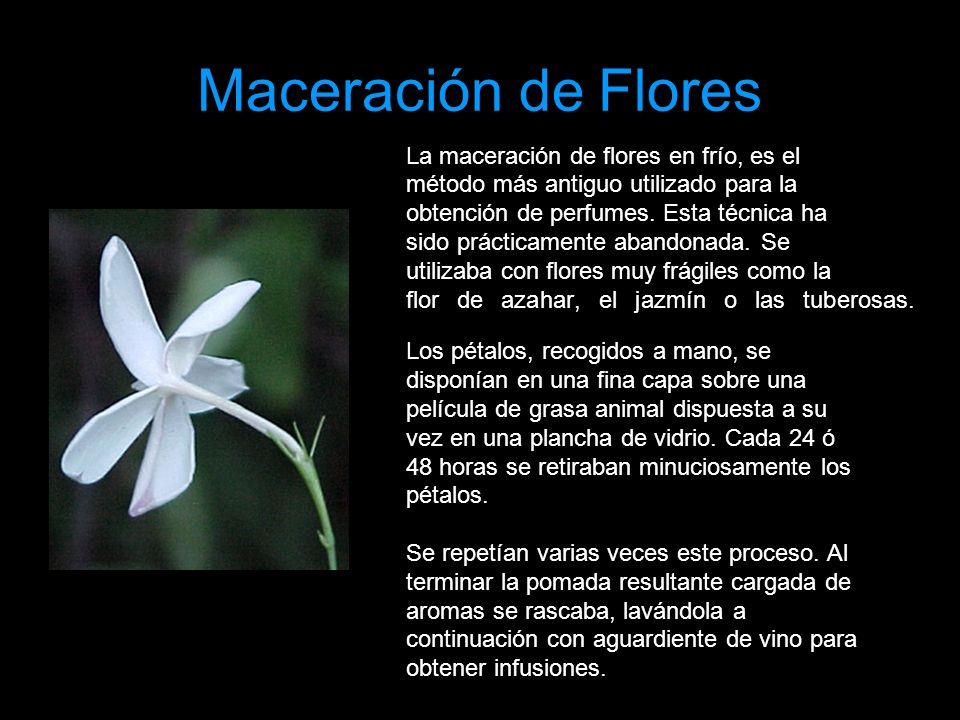 Maceración de Flores La maceración de flores en frío, es el