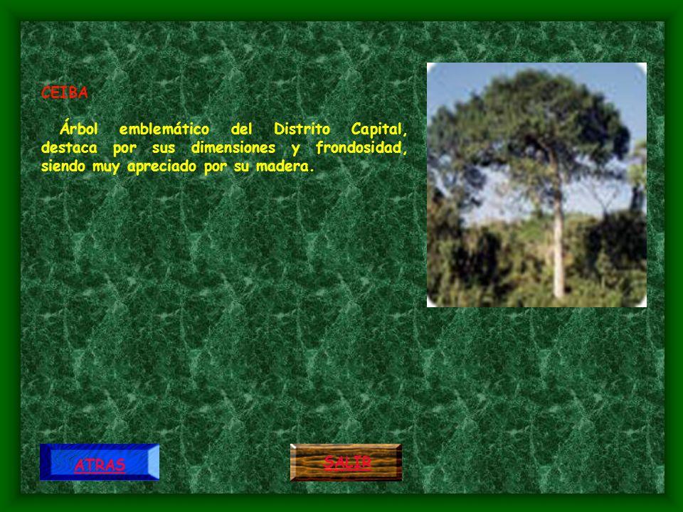 CEIBA Árbol emblemático del Distrito Capital, destaca por sus dimensiones y frondosidad, siendo muy apreciado por su madera.