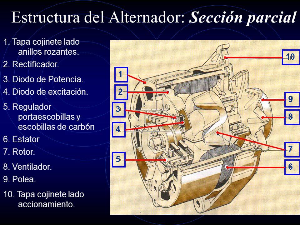Estructura del Alternador: Sección parcial