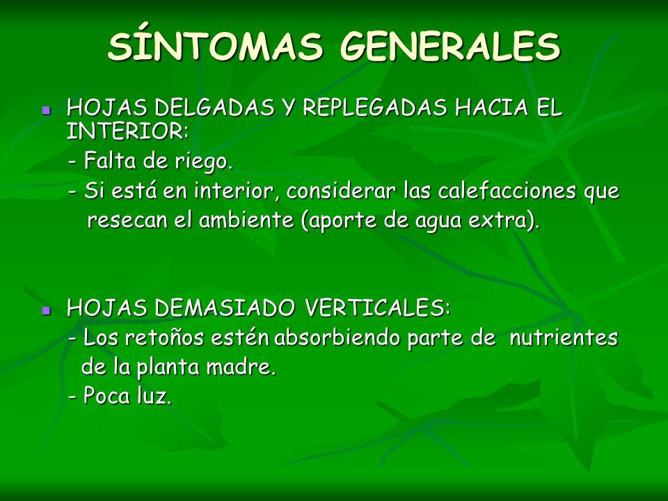 SÍNTOMAS GENERALES HOJAS DELGADAS Y REPLEGADAS HACIA EL INTERIOR: