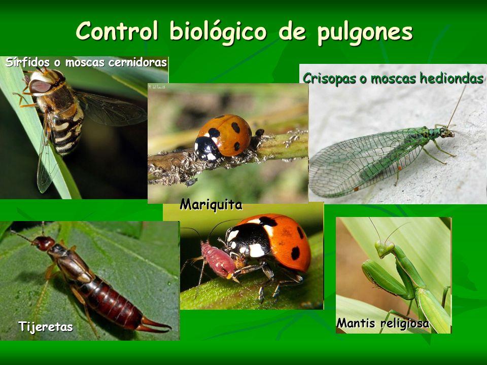 Control biológico de pulgones