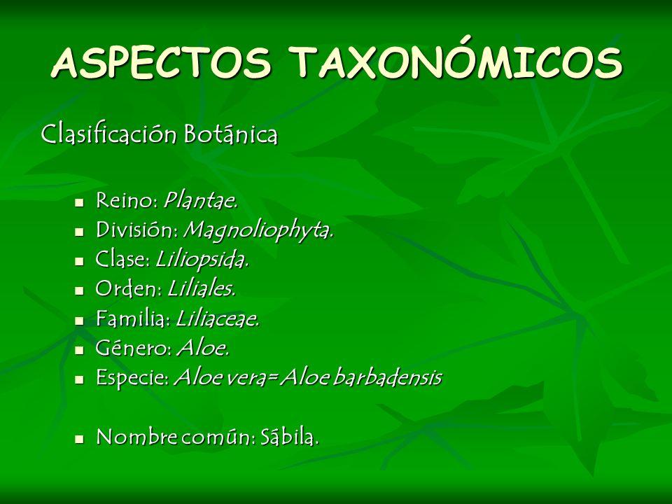 ASPECTOS TAXONÓMICOS Clasificación Botánica Reino: Plantae.