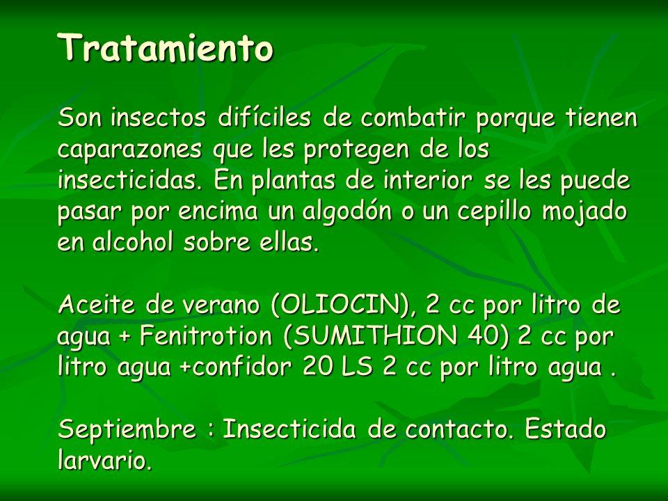 Tratamiento Son insectos difíciles de combatir porque tienen caparazones que les protegen de los insecticidas.