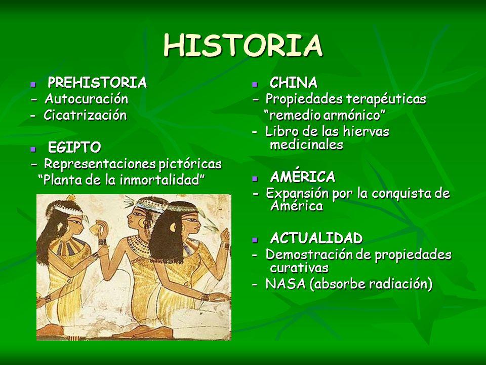 HISTORIA PREHISTORIA - Autocuración - Cicatrización EGIPTO