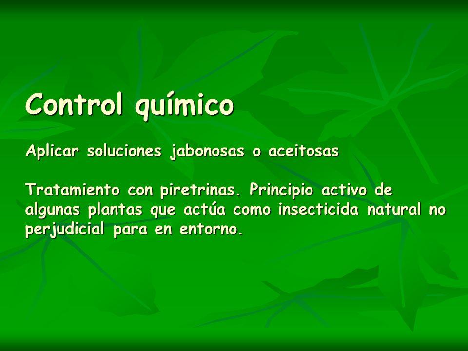 Control químico Aplicar soluciones jabonosas o aceitosas Tratamiento con piretrinas.