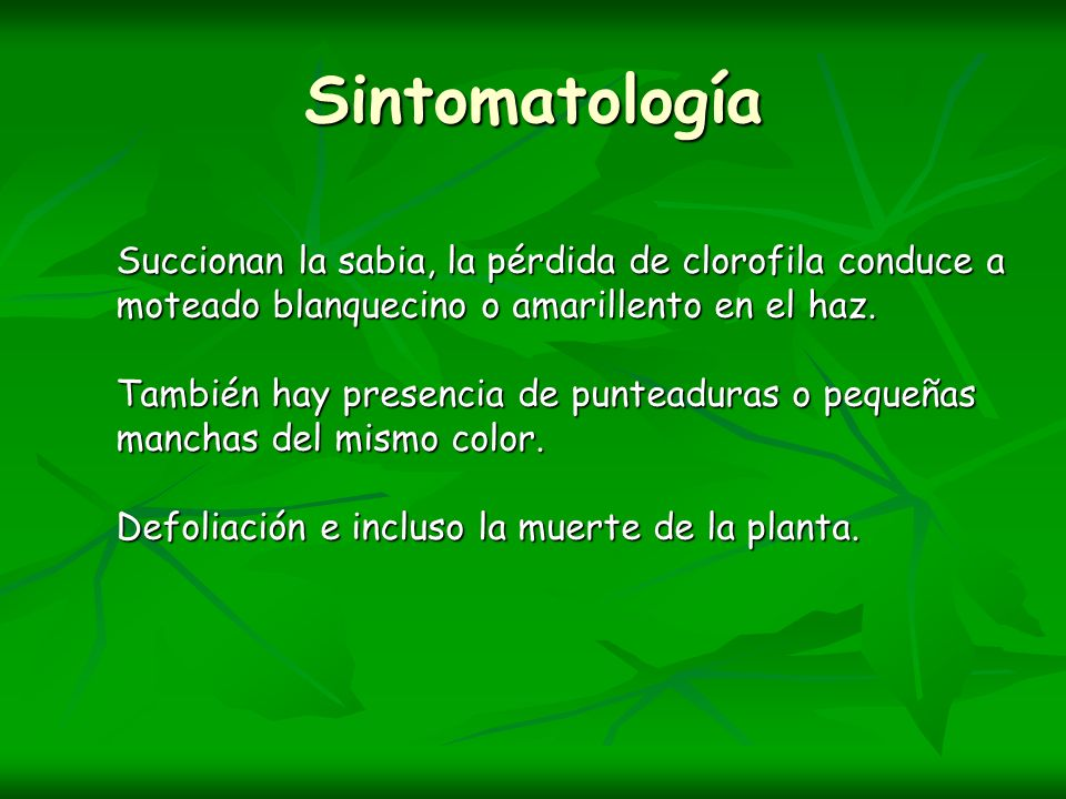 Sintomatología Succionan la sabia, la pérdida de clorofila conduce a moteado blanquecino o amarillento en el haz.