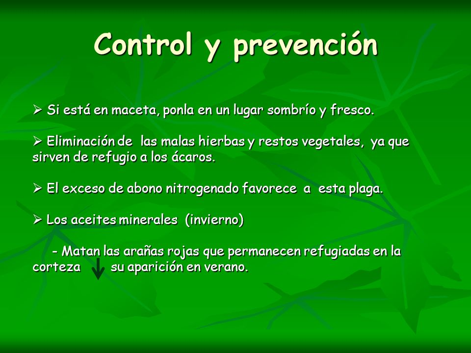 Control y prevención Si está en maceta, ponla en un lugar sombrío y fresco.