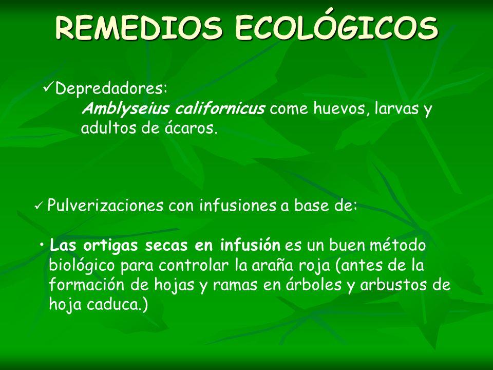REMEDIOS ECOLÓGICOS Depredadores: