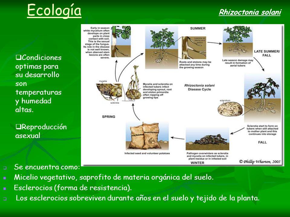 Ecología Rhizoctonia solani