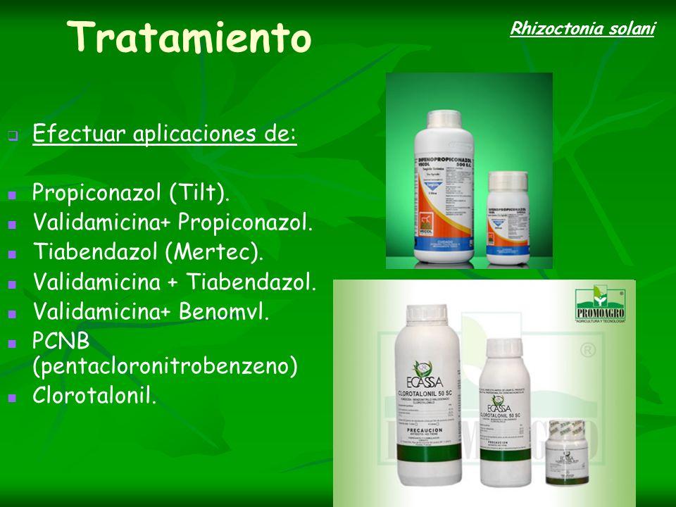 Tratamiento Efectuar aplicaciones de: Propiconazol (Tilt).