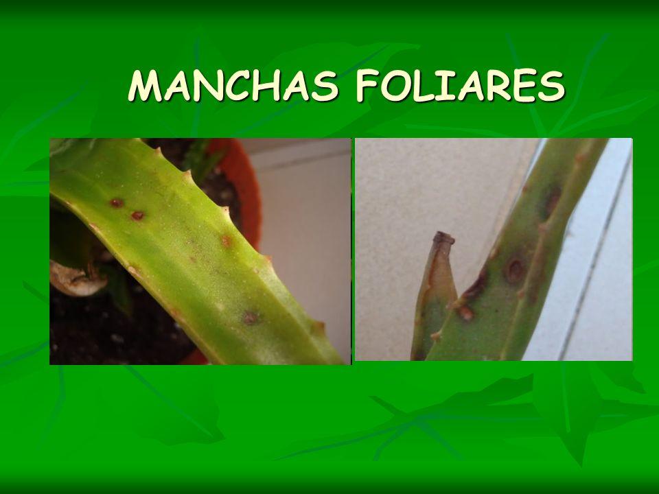 MANCHAS FOLIARES