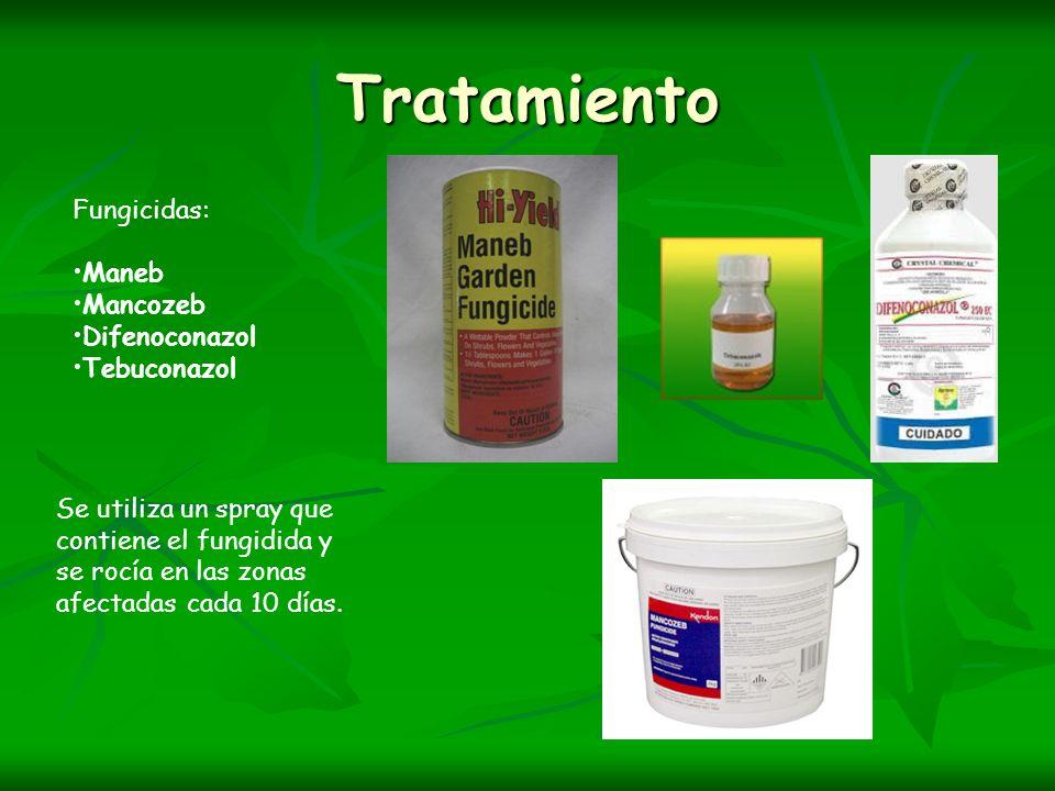 Tratamiento Fungicidas: Maneb Mancozeb Difenoconazol Tebuconazol