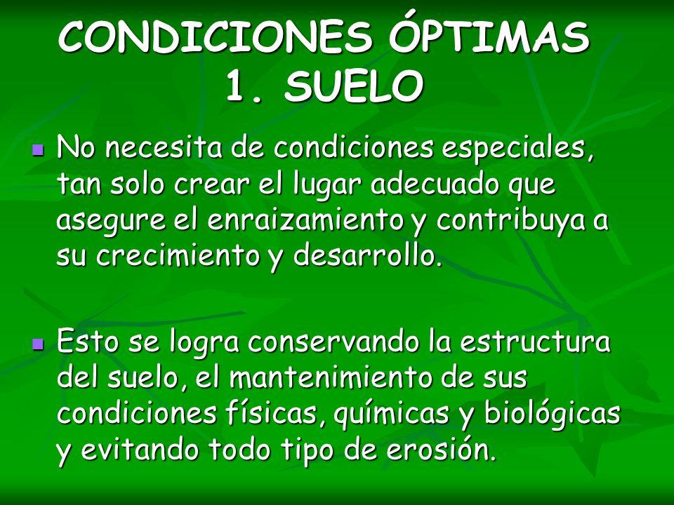 CONDICIONES ÓPTIMAS 1. SUELO
