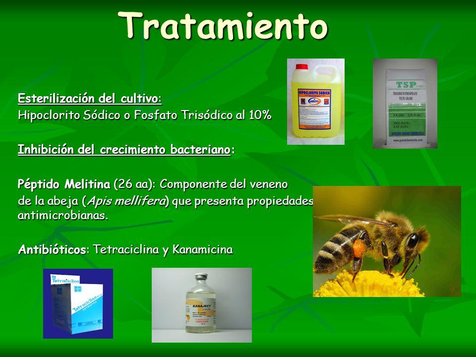 Tratamiento Esterilización del cultivo:
