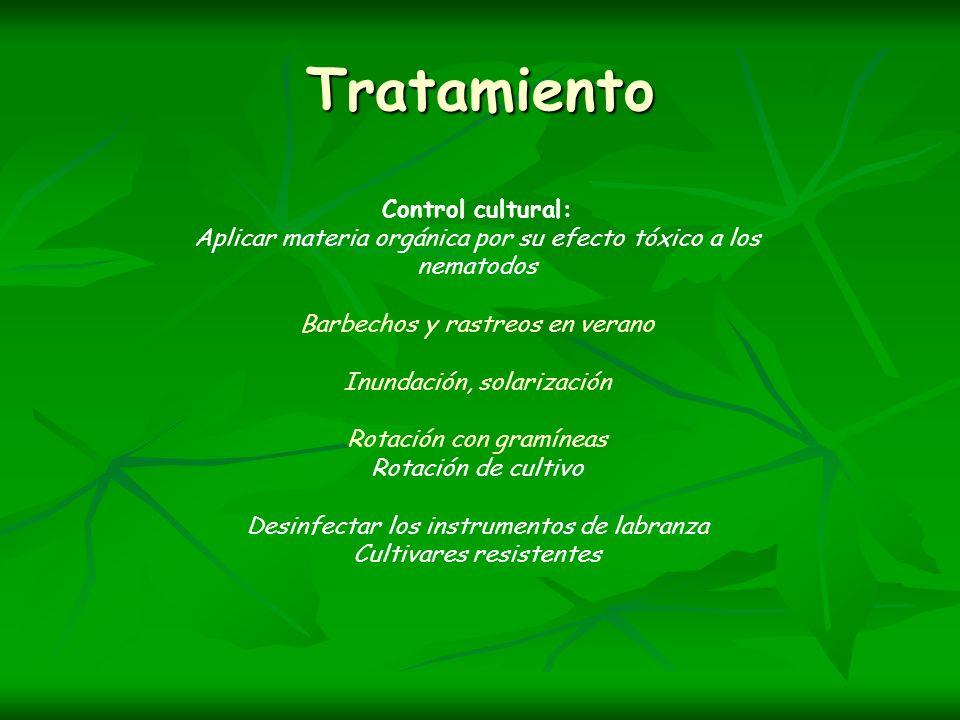 Tratamiento Control cultural:
