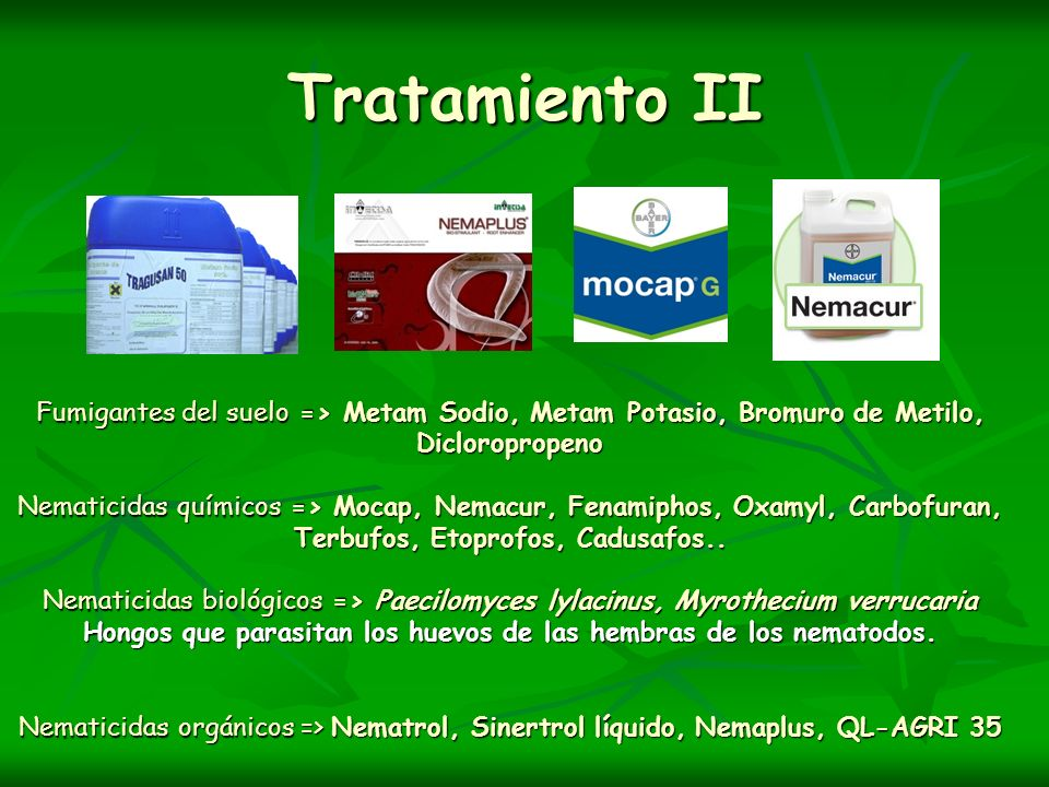Tratamiento II
