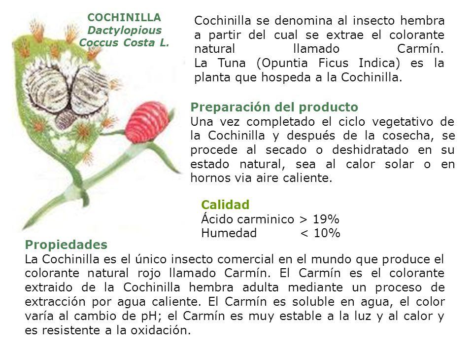 Dactylopious Coccus Costa L.