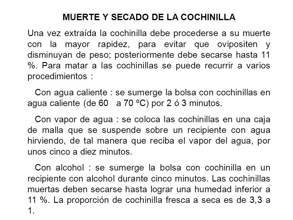MUERTE Y SECADO DE LA COCHINILLA
