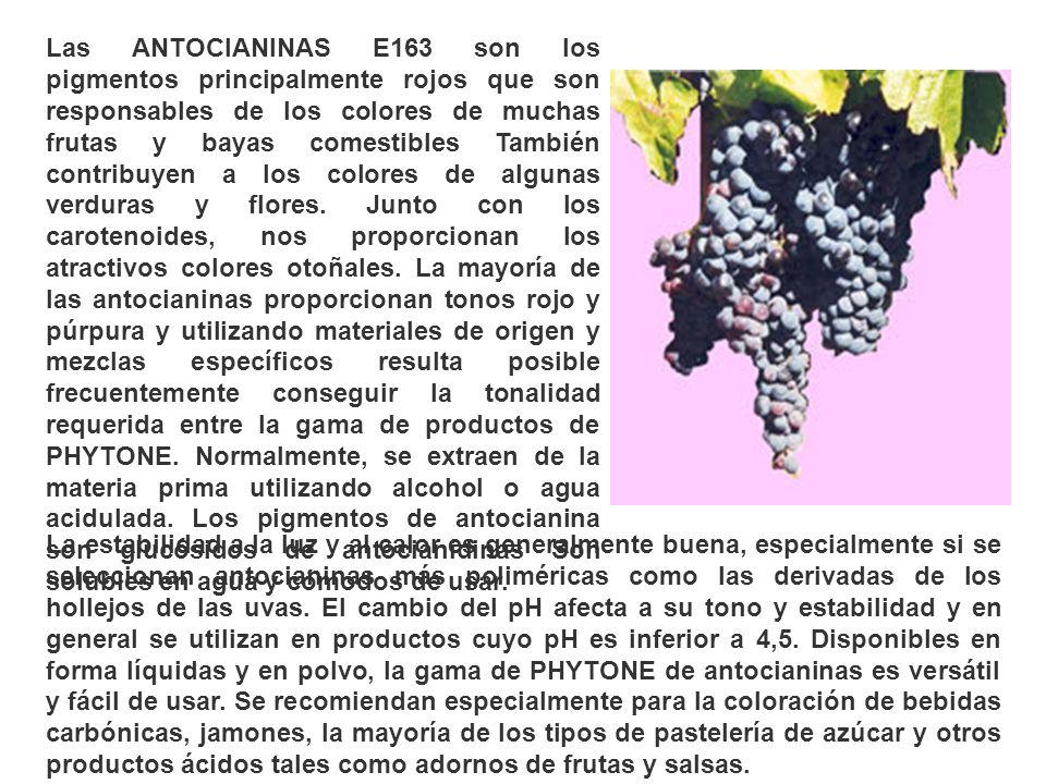Las ANTOCIANINAS E163 son los pigmentos principalmente rojos que son responsables de los colores de muchas frutas y bayas comestibles También contribuyen a los colores de algunas verduras y flores. Junto con los carotenoides, nos proporcionan los atractivos colores otoñales. La mayoría de las antocianinas proporcionan tonos rojo y púrpura y utilizando materiales de origen y mezclas específicos resulta posible frecuentemente conseguir la tonalidad requerida entre la gama de productos de PHYTONE. Normalmente, se extraen de la materia prima utilizando alcohol o agua acidulada. Los pigmentos de antocianina son glucósidos de antocianidinas Son solubles en agua y cómodos de usar.