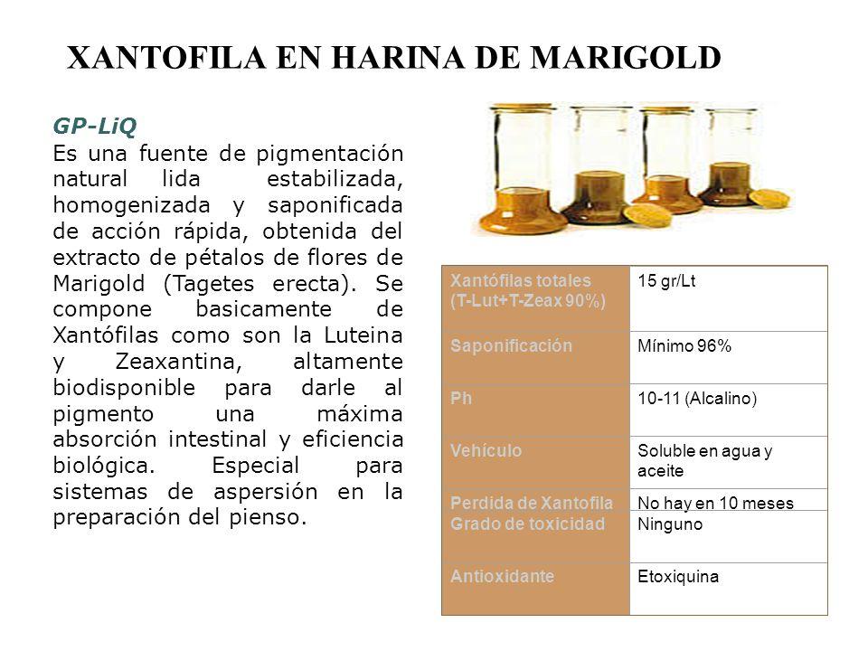 XANTOFILA EN HARINA DE MARIGOLD