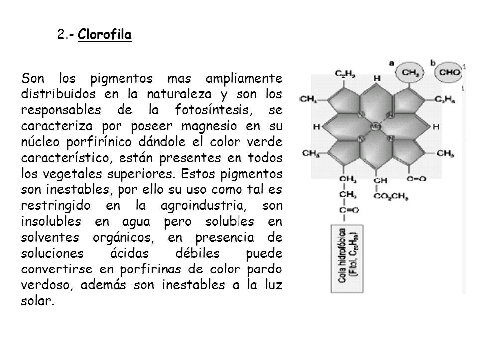2.- Clorofila