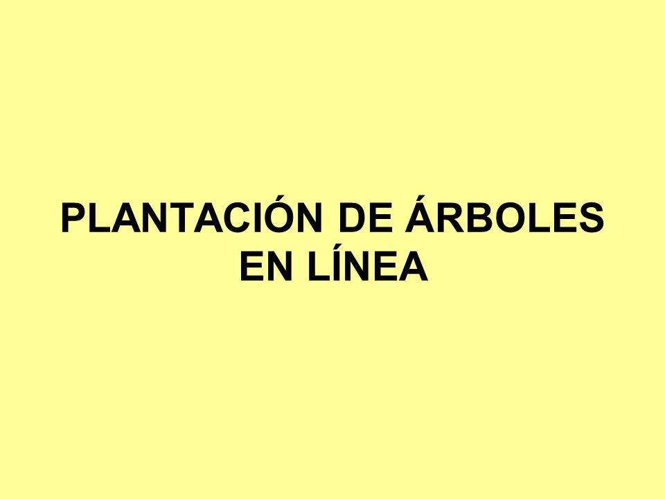 PLANTACIÓN DE ÁRBOLES EN LÍNEA