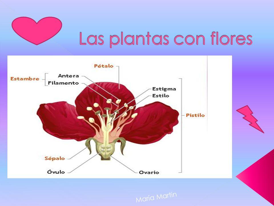 Las plantas con flores María Martin