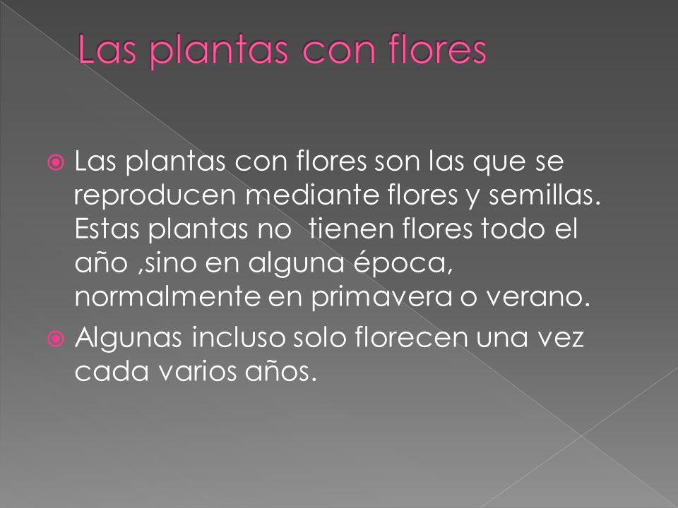 Las plantas con flores