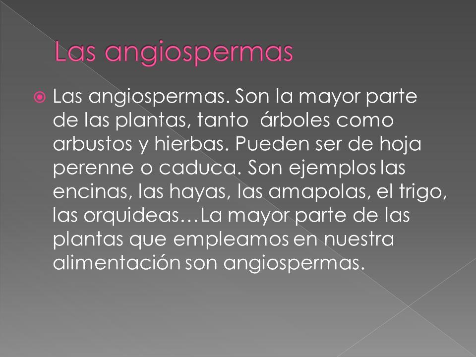 Las angiospermas