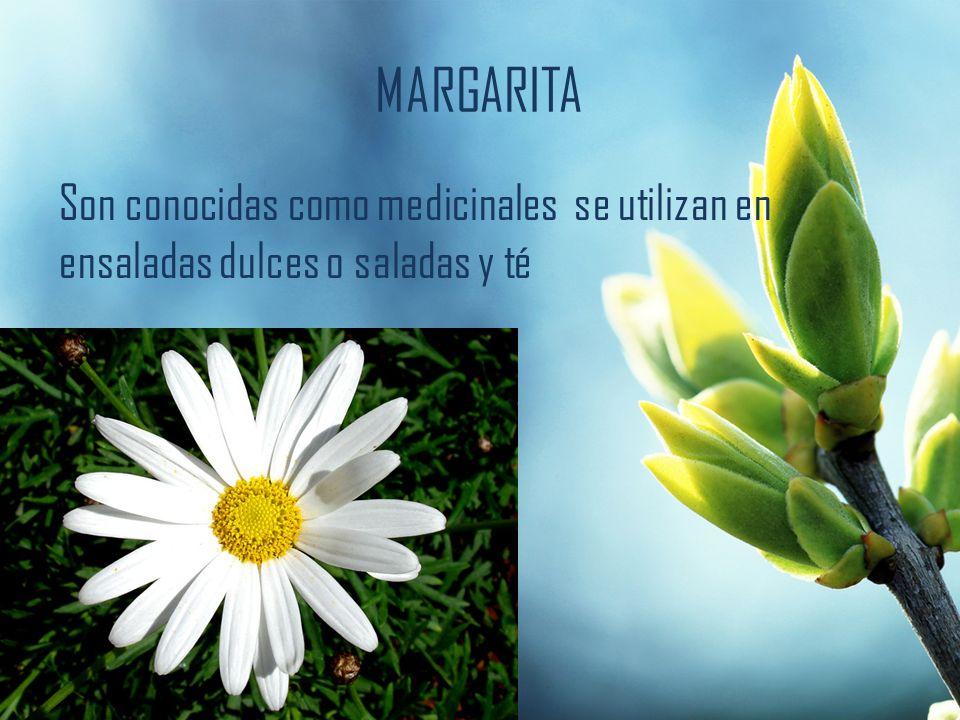 MARGARITA Son conocidas como medicinales se utilizan en ensaladas dulces o saladas y té