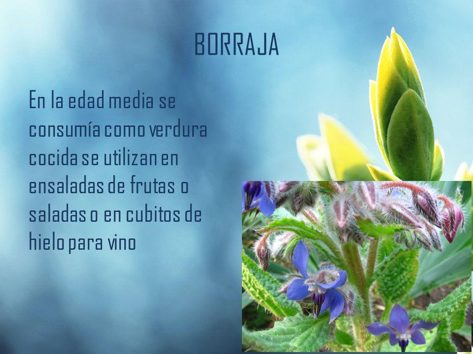 BORRAJA En la edad media se consumía como verdura cocida se utilizan en ensaladas de frutas o saladas o en cubitos de hielo para vino.
